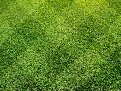 Grüne Rasenfarbe